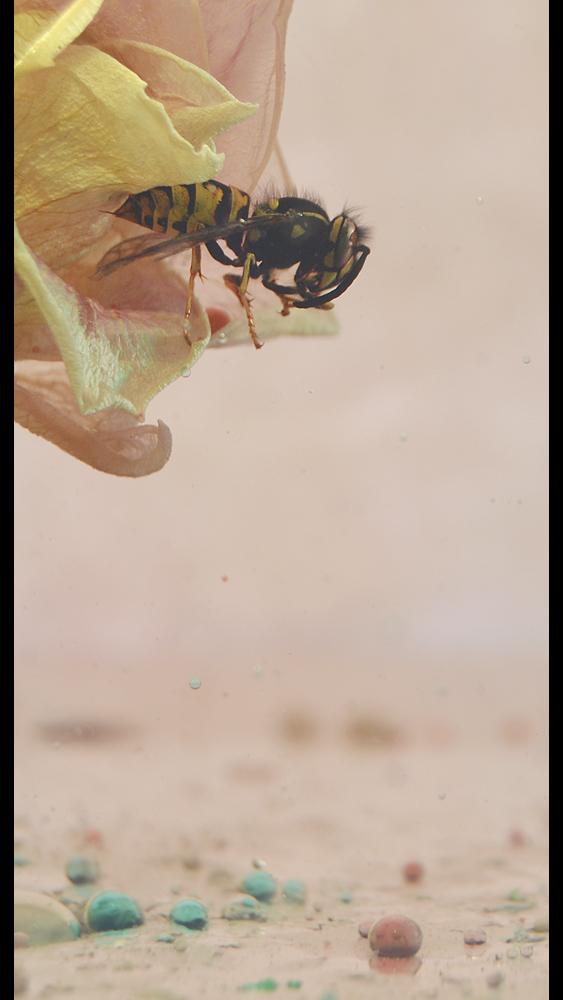 Wespe ohne Spinne